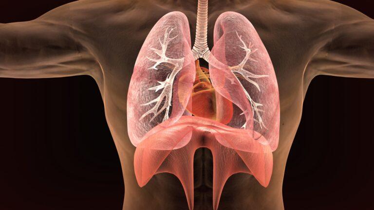 Grafik Lunge KalkKind gesund wohnen