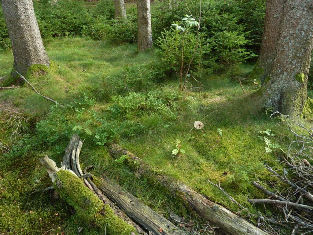 Natur Kreislauf Nachhaltigkeit Sumpfkalkputz